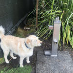 drinking fountain balmain reserve
